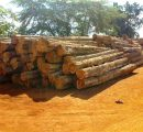 Prices for logs, sawnwood and plywood in Brazil