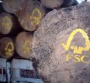423 million m3 of wood harvested from worldwide FSC certified forests