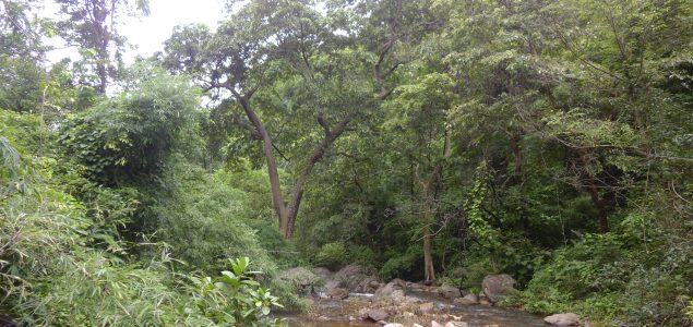 India's forests worth $1.7 trillion