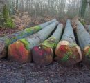 EU beech log exports to China drop by 8%
