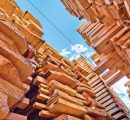 Global trade in softwood lumber driven up by Chinese huge demand