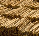 Booming European softwood logs exports to China