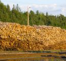 Roundwood prices in Finland reach higher level in June