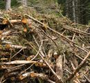 Sweden: Major agreement aims to develop high-performance fuel based on forest resources