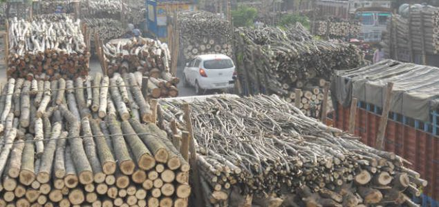 Indian poplar growers under crisis due to fall in prices