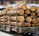 Swiss timber harvests decline by 7%; prices fall by 6% in 2015