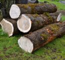 German oak sawlogs exports to China up 14% in H1/2016