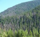 Sweden: The bark beetle could ruin 12.5 million m3 of wood this year