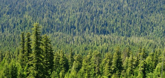 British Columbia sets agenda to increase forests competitiveness