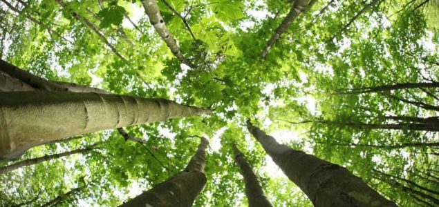 STTC Conference considers links between FLEGT licenses and forest certification