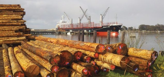Chinese importers in search for lower-quality, cheaper logs