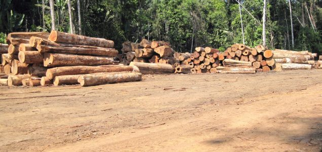 Illegal timber trade operations in Brazil uncovered by Interpol