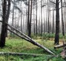 Calamities and coronavirus: Bad prospects in the German and Austrian forest