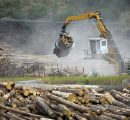 Government of British Columbia plans to reduce log exports
