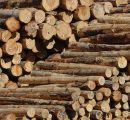 Chinese buyers avoid sawmills in the US to buy logs; lumber market tightens