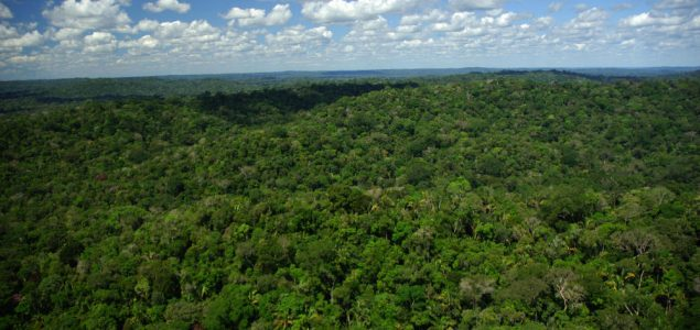 Brazilian forest production value dropped in 2015
