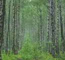 Researchers develop up-to-date forest resource information technology for Russia