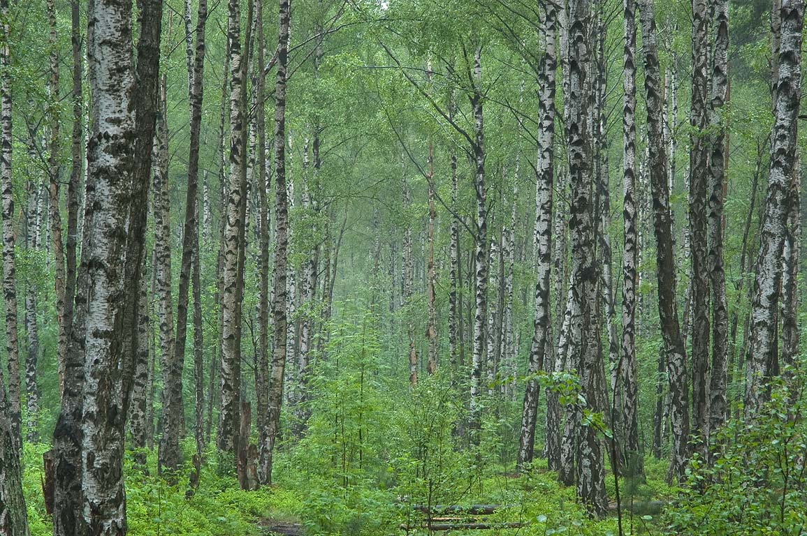 Researchers Develop Up To Date Forest Resource Information