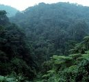 FAO requests private investments in Latin America's forests
