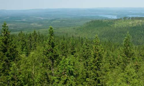Information About Russian Forestry 92