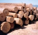 EU imports of Russian hardwood logs down by -20%
