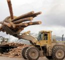 Canada to bring softwood lumber fight at WTO