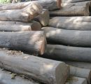 India: Domestic prices for teak logs; prices for imported sawnwood and plywood