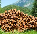 UK timber prices on the rise, with up to 6.8% increase