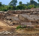 EIA accuses German company of importing illegal teak from Myanmar