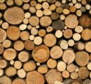 Roundwood prices in Finland mostly up in June
