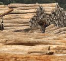 India plans to become more self-sufficient in timber