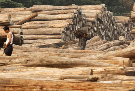 Illegal Teak Imports From Myanmar To The Eu Reported By