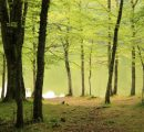 Europe's protected forests are destroyed to meet EU renewable targets, says report