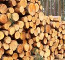 Czech Republic: Prices for softwood timber collapse