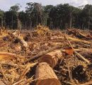 Brazil: Amazon deforestation increased by 29% last year, report shows