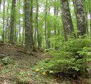 Romania launches new app for tracking illegal forest cutting