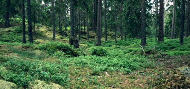 Sweden: New large player in the forest industry emerges