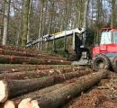 Roundwood prices in Estonia keep on going down in September