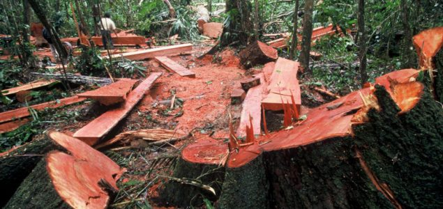 UK furniture retailer company fined for breach of EU Timber Regulation