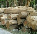 Indonesia exported $25 million worth of wood to the EU since FLEGT license