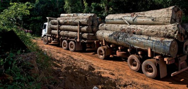 Ten European companies accused of importing illegal wood from DRC