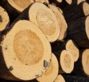Finnish roundwood prices on the way up at the end of 2016
