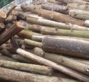 Vietnamese wood industry endangered by lack of logs
