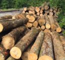 Sawlog prices in Europe fell dramatically during Q3/2016