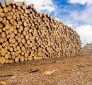 Global sawlog prices fell to the lowest level in two years in the 1Q/2019