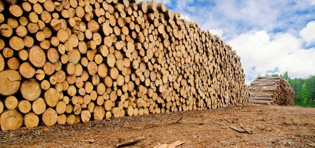 German exports of logs to China more than double this year