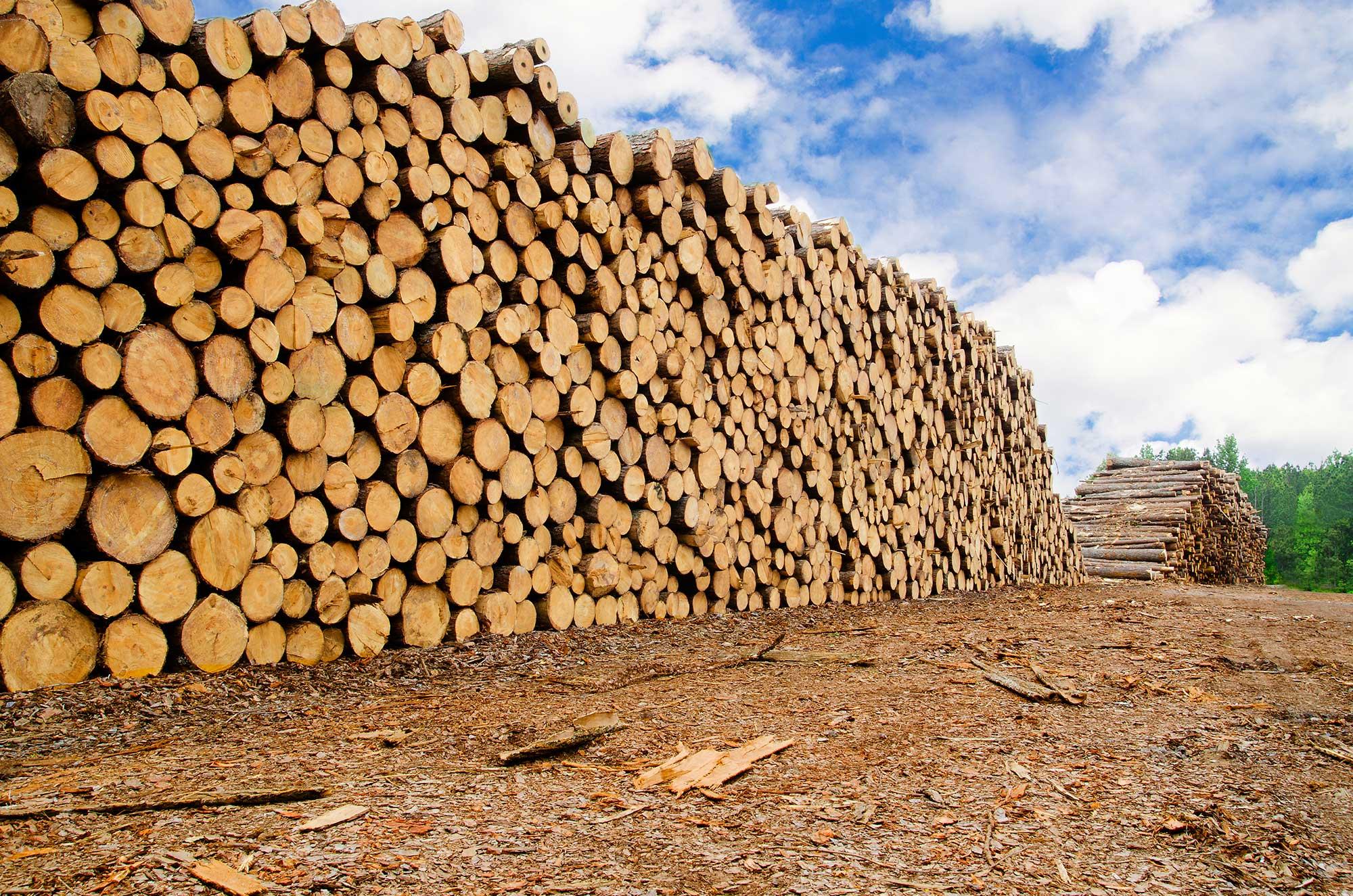 Estonia: Roundwood prices in January 2017