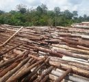 Timber businesses in Sarawak affected by export quota
