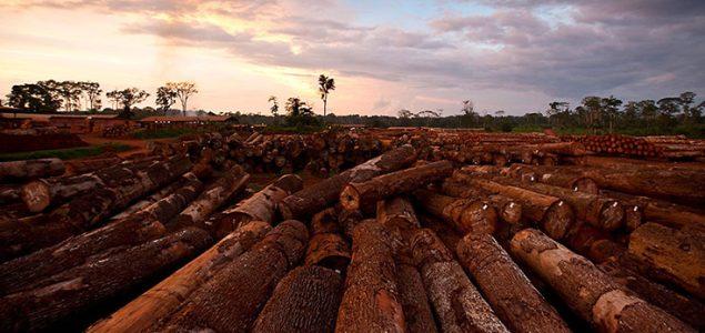 Rumours of 20% log export tax in Cameroon