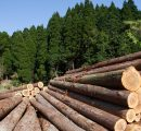 Global forest industry results for the fourth quarter of 2016